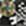 schwarz-hellgrau